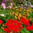 Blooming garden — Stock Photo #4948188