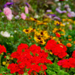 Stock Photo: Blooming garden