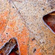Frosty leaves — Foto Stock