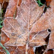 Frosty leaves — Stock Photo #4948234