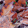 Stock Photo: Frosty leaves