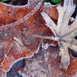 Frosty leaves — Stock Photo #4948248