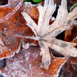 Frosty leaves — Stock Photo #4948252