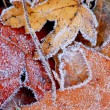 Frosty leaves — Stock Photo #4948255