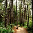 Stock Photo: Forest trail