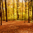 Fall forest landscape — Foto de Stock