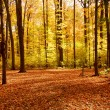 Fall forest landscape — Stock Photo #4948311
