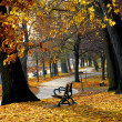 Autumn park — Stock Photo #4948317