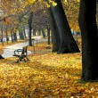 Autumn park — Stock Photo #4948337