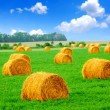 Photo: Hay bales