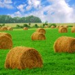 Hay bales — Stock Photo #4948725