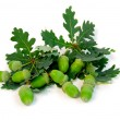Acorns oak branches — Stock Photo #4948768