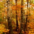 Stock Photo: Fall forest