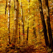 Fall forest — Stock Photo #4949144