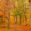 Fall forest road - Stock Photo