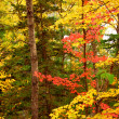 Fall forest background — Stock Photo