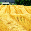 Stock Photo: Harvest farm field