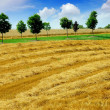 Harvest grain field — Foto Stock