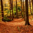 Fall forest landscape - Stockfoto