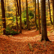 Fall forest landscape - Stock Photo