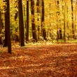 Fall forest landscape — Foto Stock