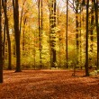 Fall forest landscape — Stock Photo