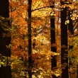 Fall forest — Foto Stock