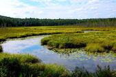 Wetlands — Stock Photo