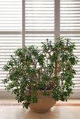 House plant — Stock Photo