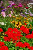 Blooming garden — Stock Photo