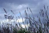 Evening grass — Stock Photo