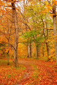 Fall forest road — Stockfoto