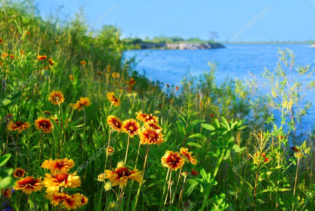 《海边可以生长的花卉有哪些 》