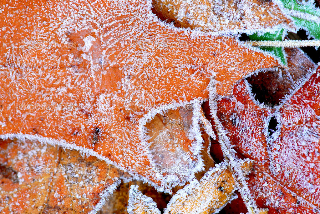 Macro of autumn leaves on the ground covered with morning frost — Stock Photo #4948233