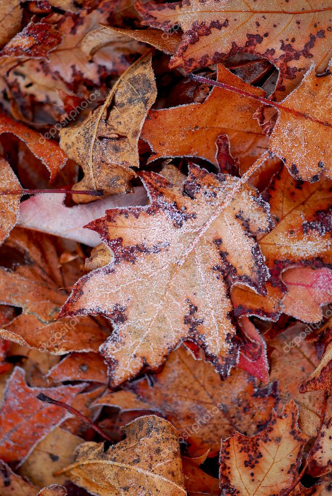 Macro of autumn leaves on the ground covered with morning frost — Stock Photo #4948258