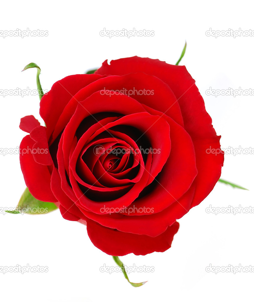 Top view of a red rose blossom isolated on white background — Stock Photo #4948931