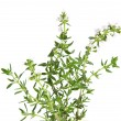 Brunch of fresh blooming thyme, isolated — Stock Photo