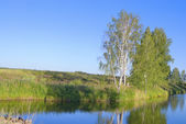 Birches on the bank of the river — Stock Photo