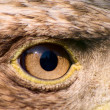 Eagle eye — Foto Stock