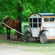 Coach with chestnut horse - Stock Photo