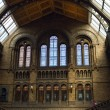 Natural History museum interior — Stock Photo