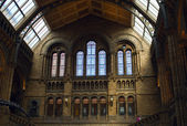 Natural History museum interior — Foto Stock