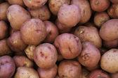 Organic red potatoes — Stock Photo