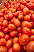 Organic red tomatoes — Stockfoto