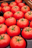 Organic red tomatoes — Stock Photo