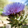 Artichoke Flower - Stock Photo