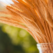 Wheat stalks in a vase — Stock Photo