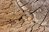 Bark and wood background — Stock Photo