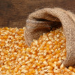 Stock Photo: Maize grains