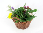Medicinal plants in the basket — Stock Photo